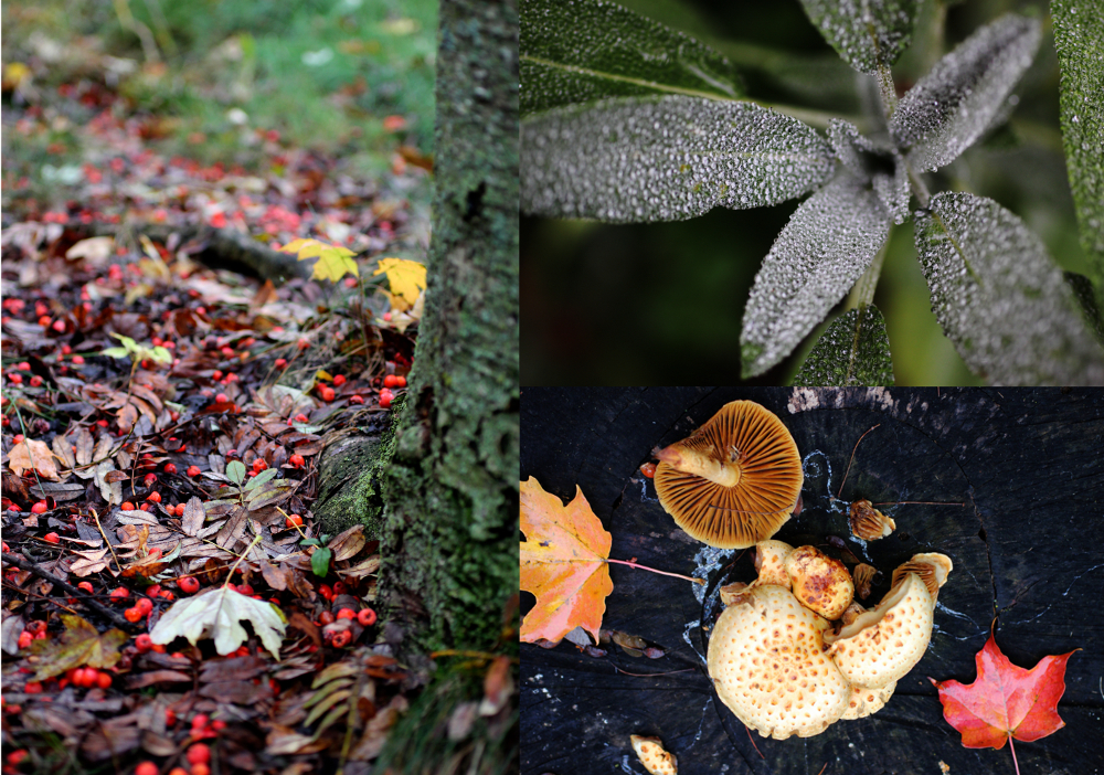 autumnnotes1