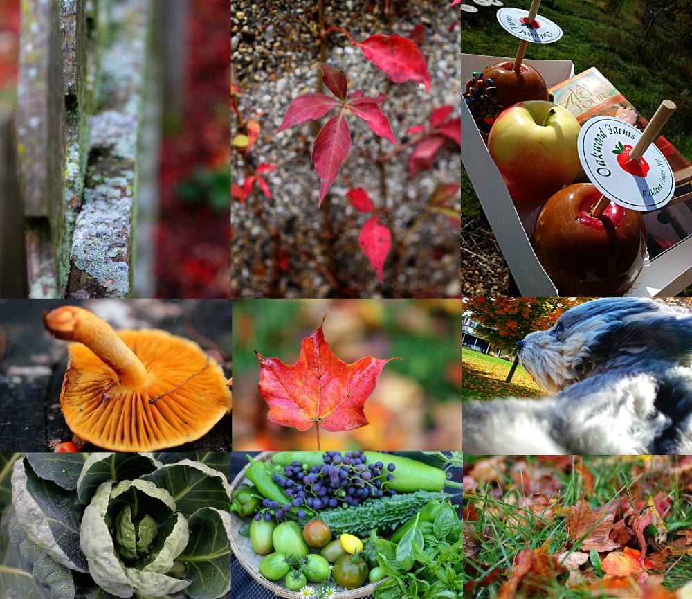autumnnotes2